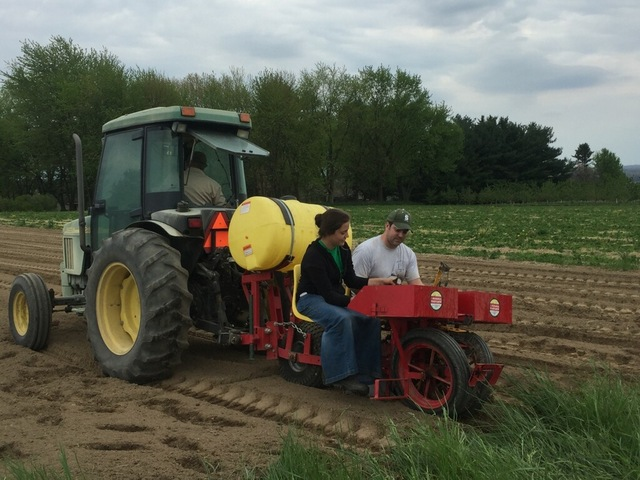 Planting strawberries using the mechanical transplanter