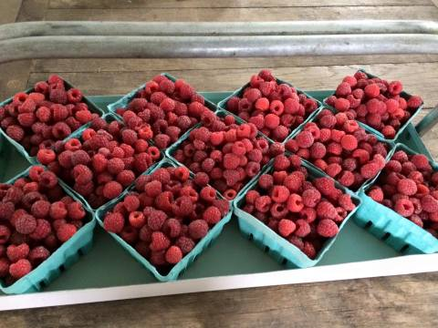 The first red raspberries