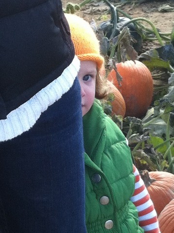 Peek-a-boo from the pumpkin patch