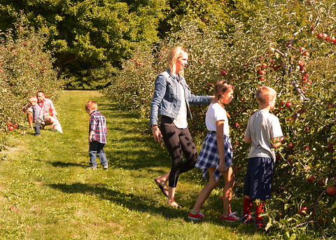 A family picking apples