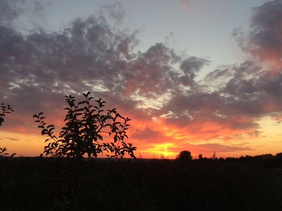Sunset over the trees in the orchard