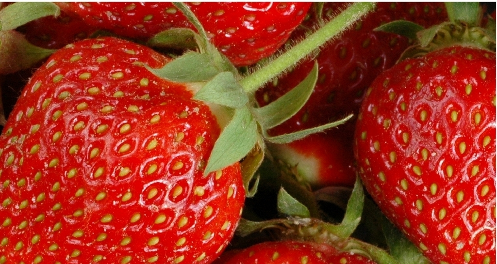 Strawberries close up