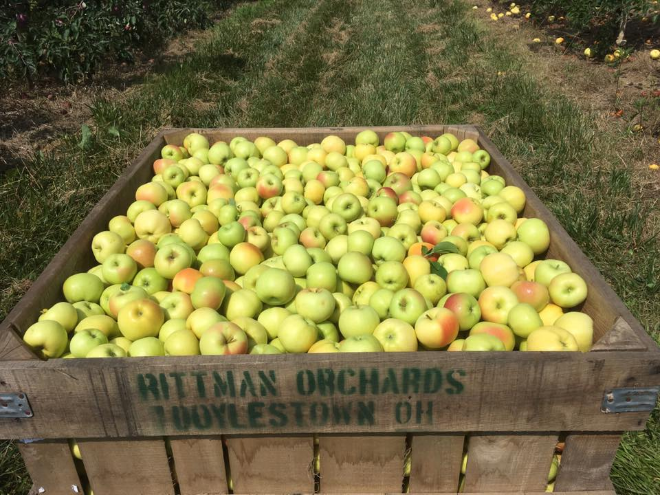 Pristine apples in a bin