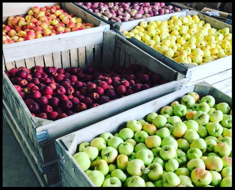 Apple bins in the warehouse