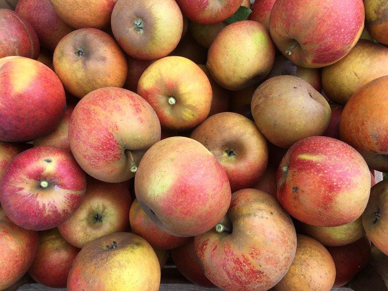 A crate full of Karmin de Sonnaville apples